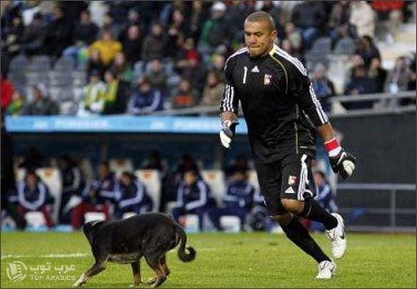 كلب نزل يلعب مع البرازيل وفنزويلا